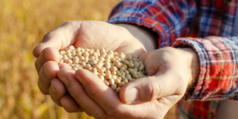 soja: safra terá alta de 2,3% aquecendo exportações